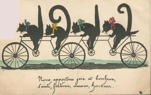 chats à vélo