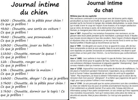 journal-du-chat_n