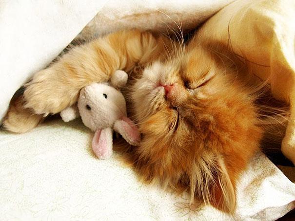 Le chat à peluche. Comble de la cuteness ou de la lose? C'est selon.